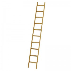Wooden step & Leaning Ladder